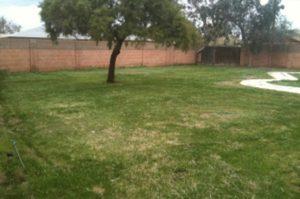 08-backyard